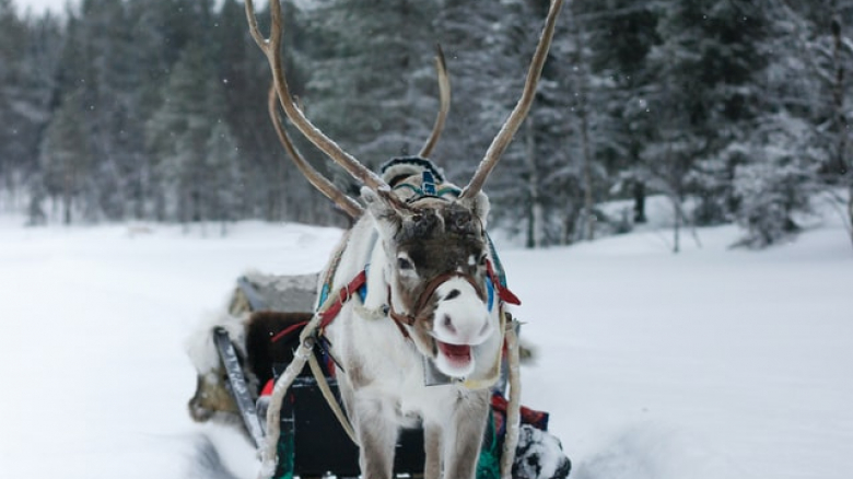 Ruby Snowcarol and The Annual Reindeer Games